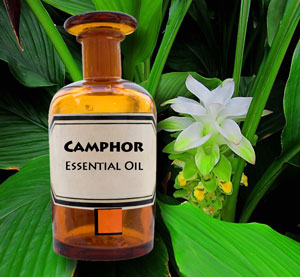 Camphor found in the essential oils of turmeric