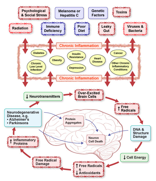 Chronic Inflammation in the Brain
