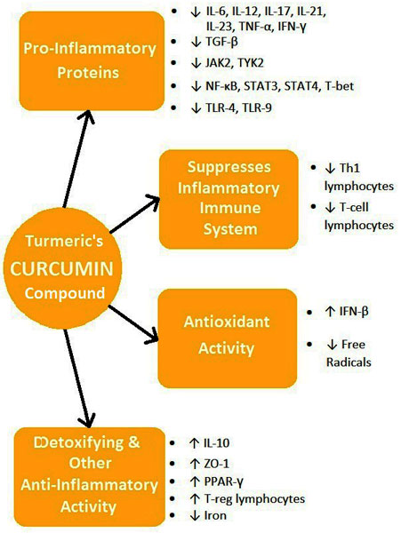 Curcumin's Anti-MS Activity