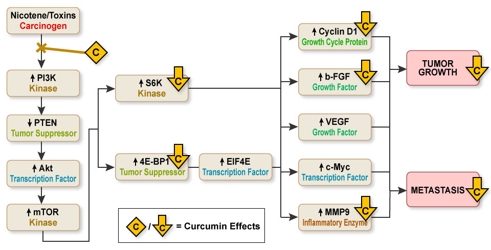 Figure VI.22 - How Turmeric's Curcumin Compounds Stop Head & Neck Cancers