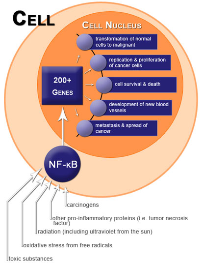 Figure VI.3: Activated & Unregulated NF-κB Promotes Cancer